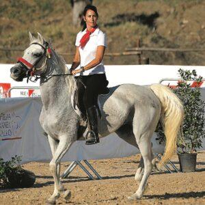 La rinascita del cavallo siciliano – Gds 17/01/2021